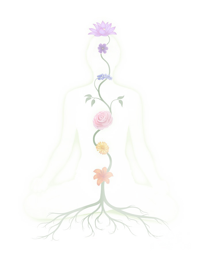 chakras flower meditate